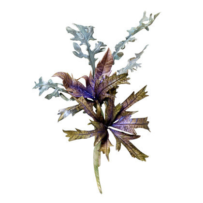Squires kitchen veiner sea holly eryngium bl tter pr ger 8 for Kitchen 87 mount holly